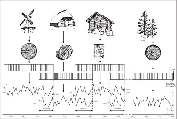 Zasada budowania chronologii wzorcowej (w oparciu o zakładkę)